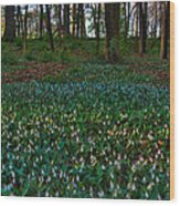 Trout Lilies On Forest Floor Wood Print by Steve Gadomski