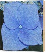 True Blue. Wood Print