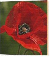 Truly Red Oriental Poppy Wildflower Wood Print