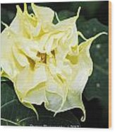 Trumpet Flower Accented Fx  Wood Print