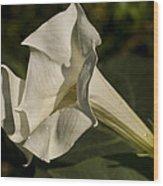 Trumpet Flower Wood Print