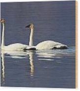 Trumpeter Swan Pair Wood Print