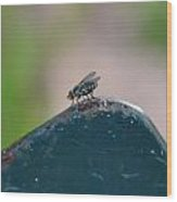 tThat fly on the wall Wood Print