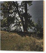Tubbs Hill On Lake Cd'a Wood Print