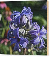Tube Clematis Blossoms Wood Print