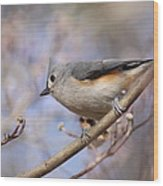 Tufted Titmouse - On The Slope Wood Print