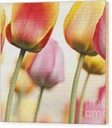 Tulip - Impressions 1 Wood Print