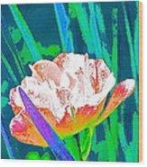 Tulip 45 Wood Print