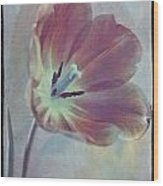 Tulip Adventure Wood Print