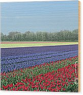 Tulip And Hyacinth Fields In Holland. Panorama Wood Print