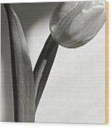 Tulip At My Window Wood Print