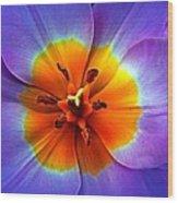 Tulip At Sunset Macro Wood Print