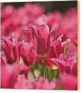 Tulip Bed Wood Print