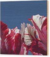 Tulip Estella Reinfeld Wood Print