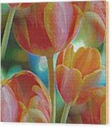 Tulip Fascination Wood Print