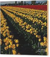 Tulip Fields Forever Wood Print