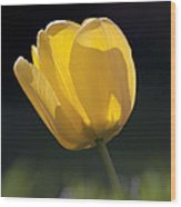 Tulip Flower Series 1 Wood Print