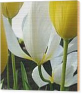 Tulip Flowers Art Prints Yellow White Tulips Floral Wood Print by Baslee Troutman