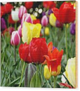Tulip Garden University Of Pittsburgh  Wood Print