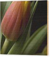 Tulip On Black Wood Print by Al Hurley