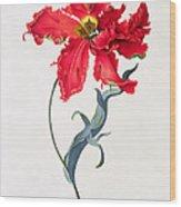 Tulip Perroquet Rouge Wood Print