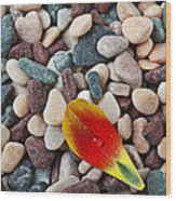 Tulip Petal And Wet Stones Wood Print