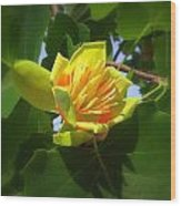 Tulip Poplar Flower Wood Print