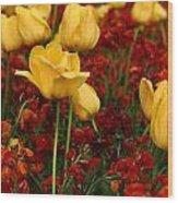 Tulip Sunshine Wood Print