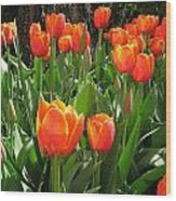 Tulip Time Wood Print by Margaret Hodgson