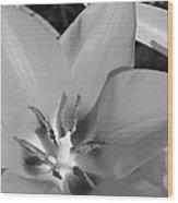 Tulip Up Close Wood Print