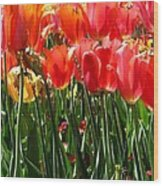 Tulip Uprising Wood Print