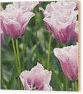 Tulipa 'blue Heron' Wood Print
