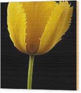Tulipa Jaune Wood Print