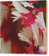 Tulips - Red And White Wood Print