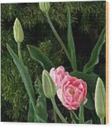 Tulips And Evergreen Wood Print