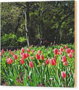 Tulips And Woods Wood Print