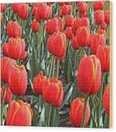 Tulips At Boston Public Garden Wood Print
