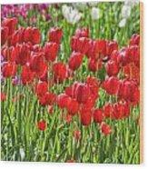 Tulips Galore Wood Print