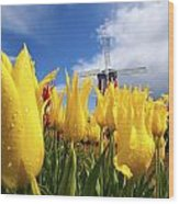 Tulips In A Field And A Windmill At Wood Print