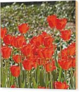 Tulips In The Field Wood Print