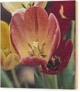 Tulips Wood Print by Juan  Silva