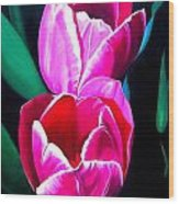 Tulips Wood Print by Karen Casciani