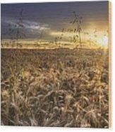 Tumble Wheat Wood Print