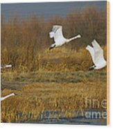 Tundra Flight Wood Print