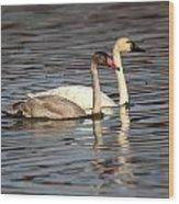 Tundra Swan And Cygnet Wood Print