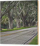 Tunnel Of Trees Wood Print by Robert Smith