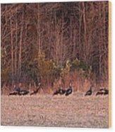 Turkey - Wild Turkey - Seventeen Longbeards Wood Print