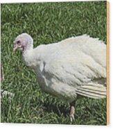 Turkey And The Chopping Block Wood Print