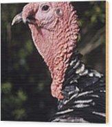 Turkey Cock Wood Print