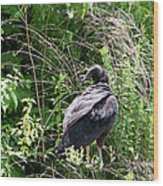 Turkey Vulture - Buzzard Wood Print by EricaMaxine  Price